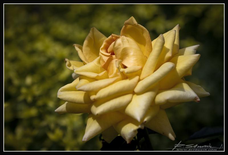 _MG_3390_[www.rstruzik.com>.jpg